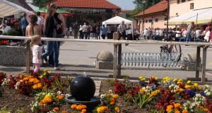 borovnice-8-2013