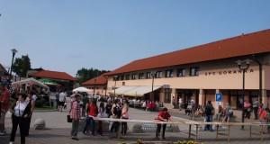 borovnice4-2013