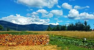 Dan bobičastog voća u Fužinama i Liču